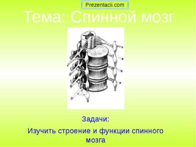 Тема: Спинной мозг Задачи: Изучить строение и функции спинного мозга Prezenta...