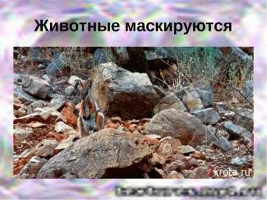 Животные маскируются