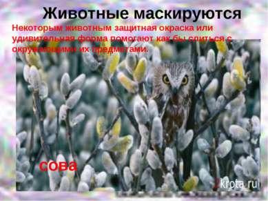Животные маскируются сова Некоторым животным защитная окраска или удивительна...