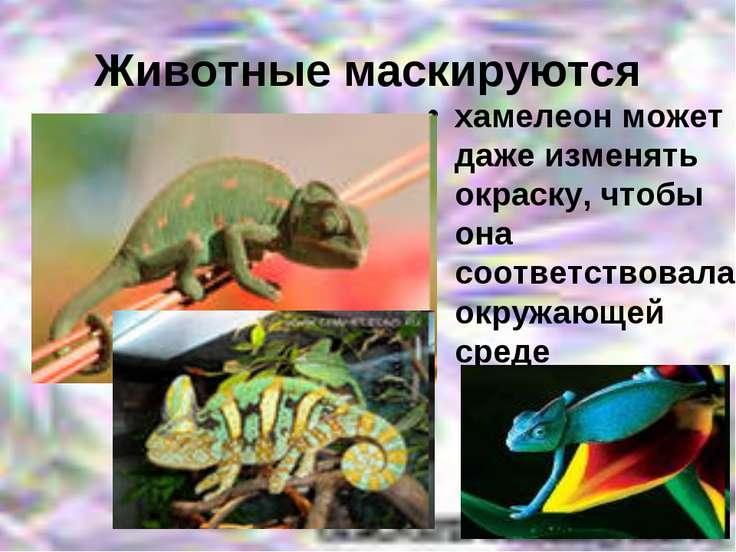 Животные маскируются хамелеон может даже изменять окраску, чтобы она соответс...