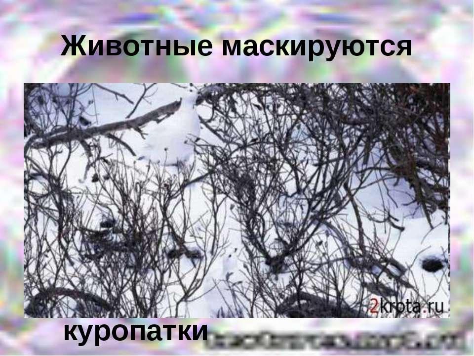 Животные маскируются куропатки