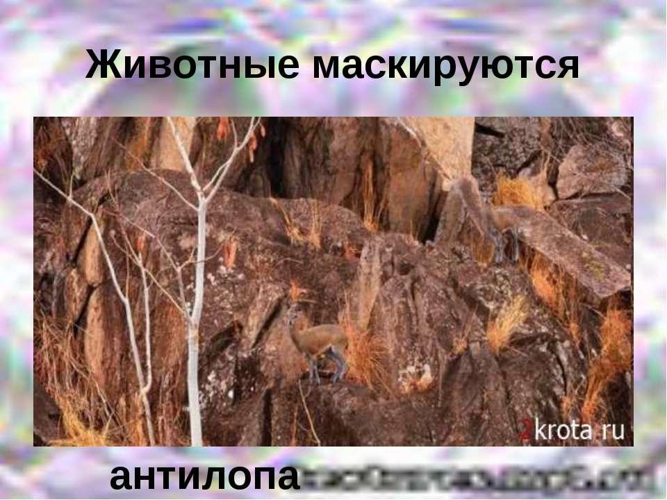 Животные маскируются антилопа