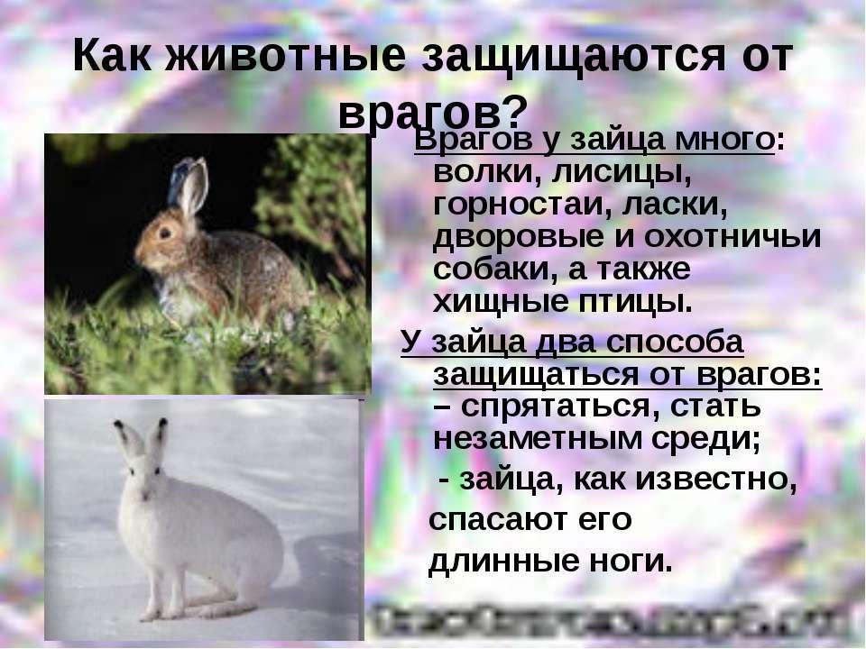 Как животные защищаются от врагов? Врагов у зайца много: волки, лисицы, горно...