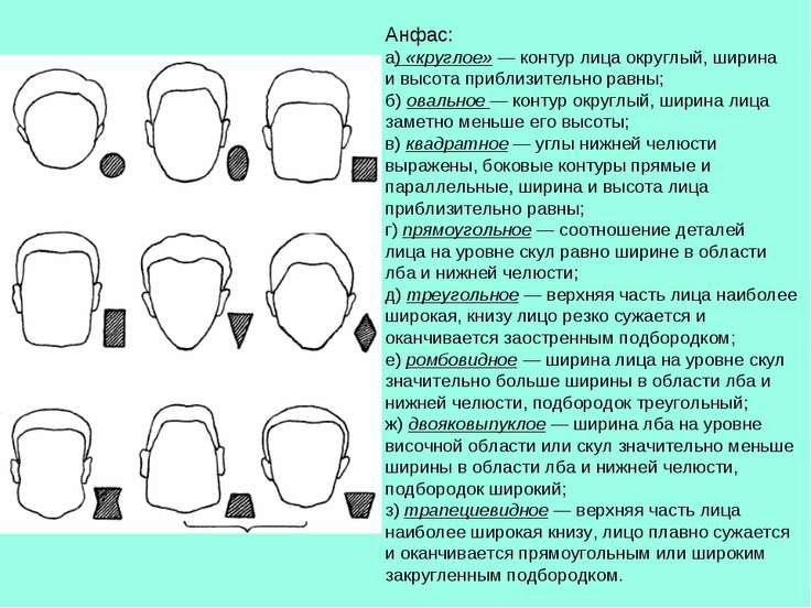 Анфас: а) «круглое» — контур лица округлый, ширина и высота приблизительно ра...