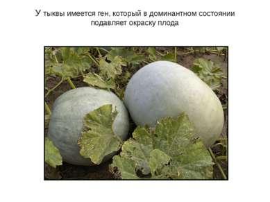 У тыквы имеется ген, который в доминантном состоянии подавляет окраску плода