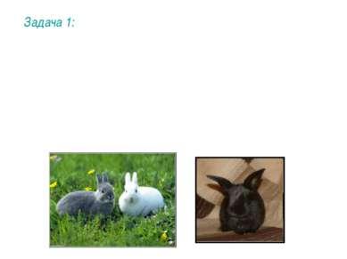 Задача 1: Окрашенность шерсти кроликов (в противоположность альбинизму) опред...