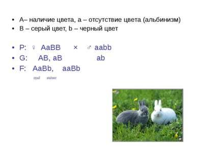 А– наличие цвета, a – отсутствие цвета (альбинизм) B – серый цвет, b – черный...