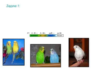 У попугаев цвет перьев определяется двумя парами генов. Сочетание двух домина...