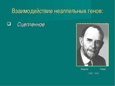 Взаимодействие неаллельных генов: Сцепленное наследование Морган Томас (1866 ...