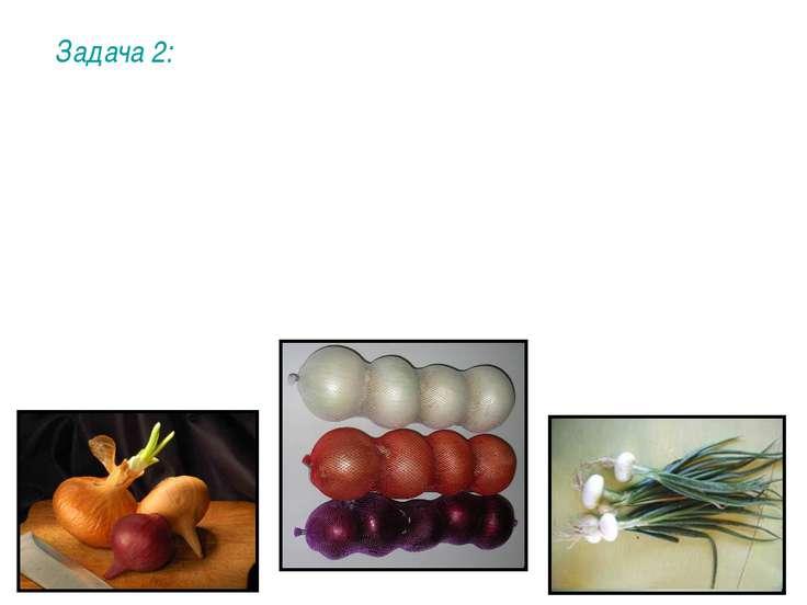 Задача 2: У лука доминантный ген А определяет наличие цвета у луковиц (а – бе...