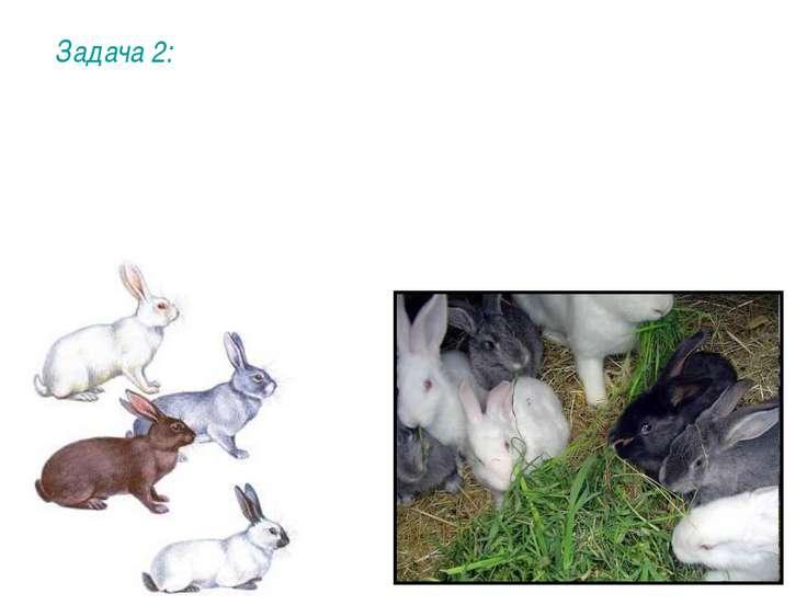 Задача 2: При скрещивании между собой серого и белого кролика половина потомс...