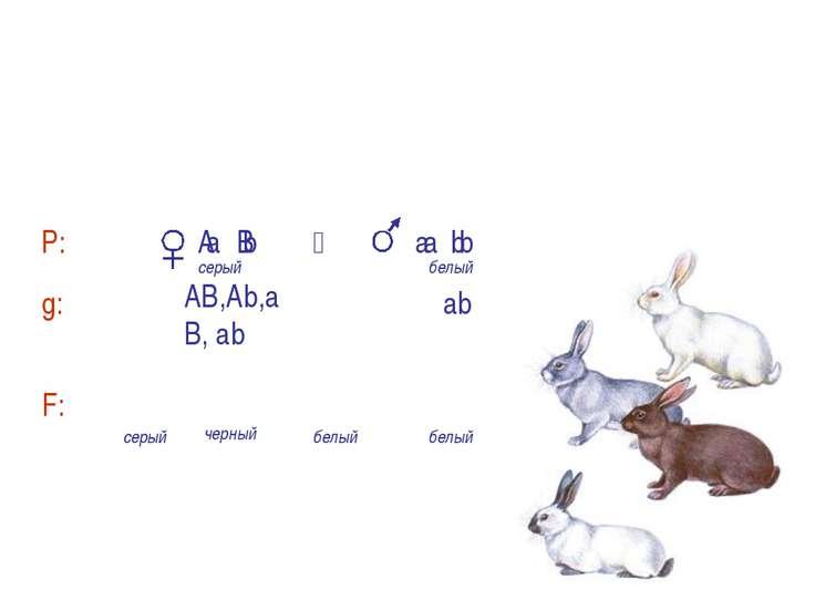 а b Аа Вb, Аа bb, аа Вb, аа bb а b а b А В А– черный цвет, a– белый цвет B – ...