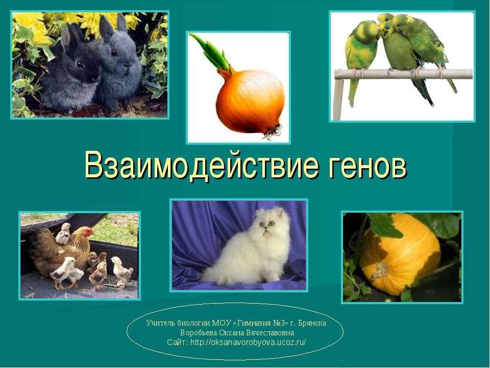 Взаимодействие генов Учитель биологии МОУ «Гимназия №3» г. Брянска Воробьева ...