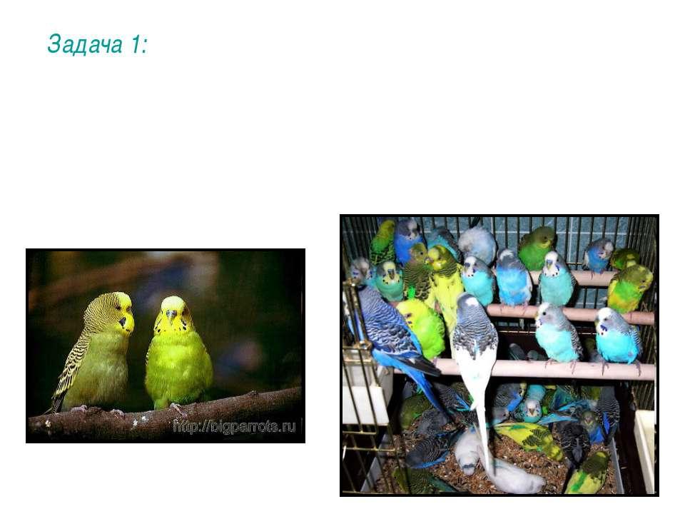 Задача 1: При скрещивании между собой двух зеленых особей получили попугаев в...