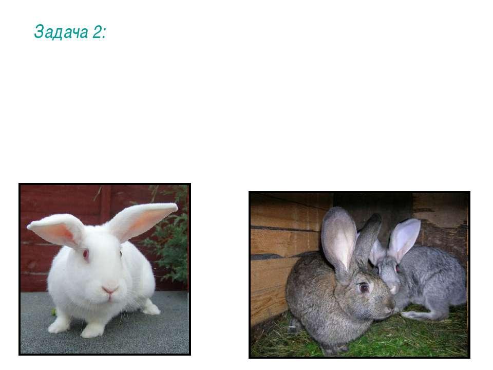 Задача 2: У кроликов цвет шерсти определяется двумя парами генов. Ген А (а) о...