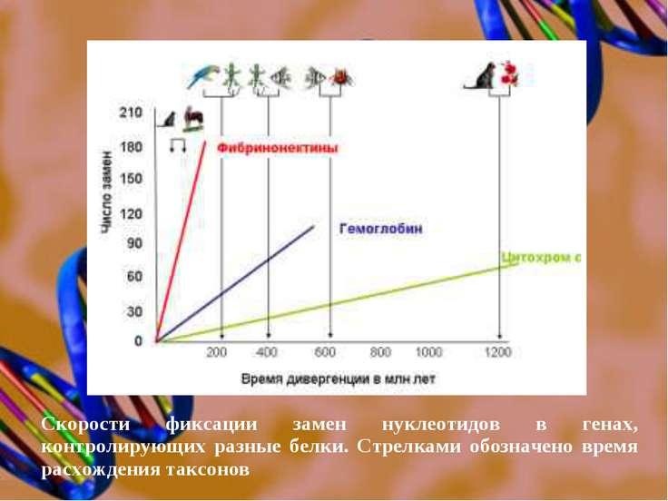 Скорости фиксации замен нуклеотидов в генах, контролирующих разные белки. Стр...