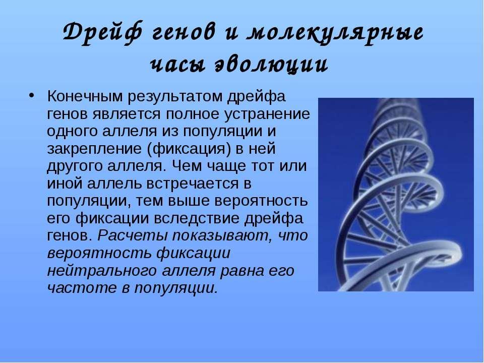Дрейф генов и молекулярные часы эволюции Конечным результатом дрейфа генов яв...