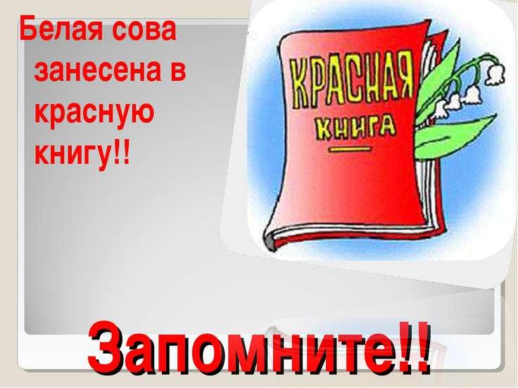 Запомните!! Белая сова занесена в красную книгу!!