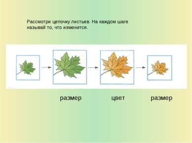 Рассмотри цепочку листьев. На каждом шаге называй то, что изменится. размер р...