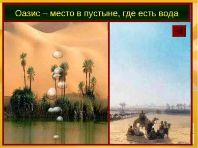 Оазис – место в пустыне, где есть вода