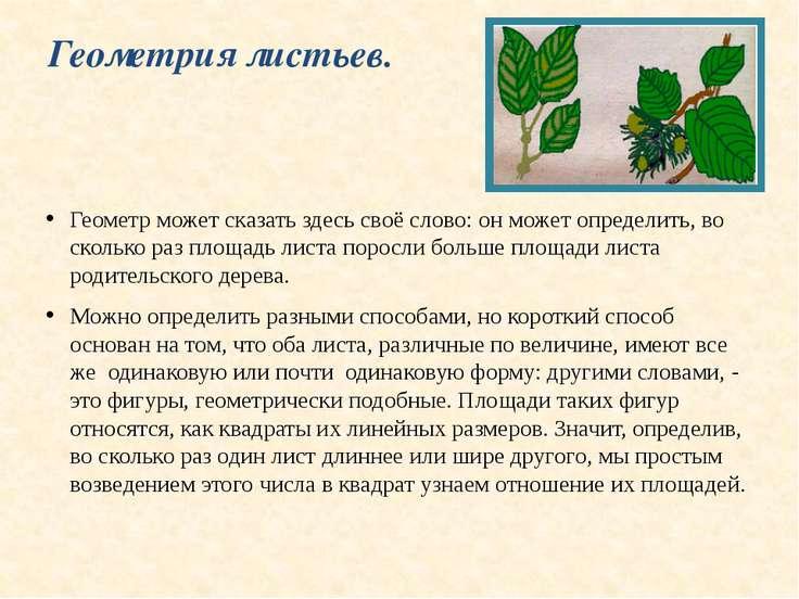 Геометрия листьев. Геометр может сказать здесь своё слово: он может определит...