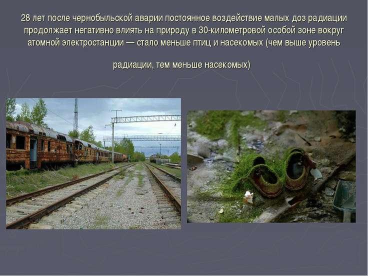 28 лет после чернобыльской аварии постоянное воздействие малых доз радиации п...