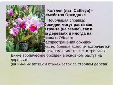 Каттлея (лат. Cattleya) - семейство Орхидные Небольшая справка: Орхидеи могут...