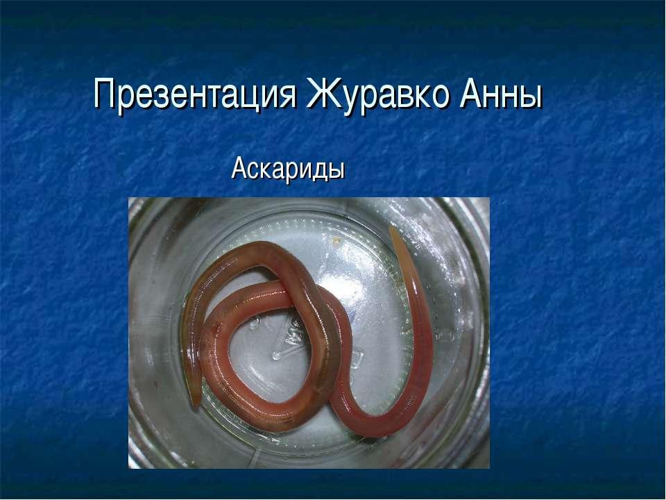 Презентация Журавко Анны Аскариды