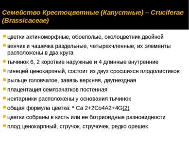 Семейство Крестоцветные (Капустные) – Cruciferae (Brassicaceae) цветки актино...