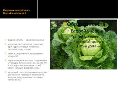 Капуста огородная – Brassica оlеrасеа L. родина капусты – Средиземноморье мяс...