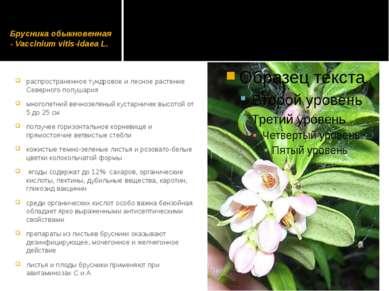 Брусника обыкновенная - Vaccinium vitis-idaea L. распространенное тундровое и...