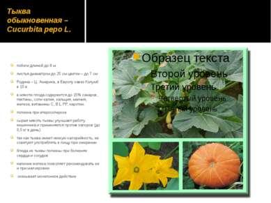 Тыква обыкновенная – Cucurbita pepo L. побеги длиной до 8 м листья диаметром ...