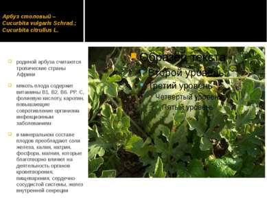 Арбуз столовый – Cucurbita vulgaris Schrad.; Cucurbita citrullus L. родиной а...