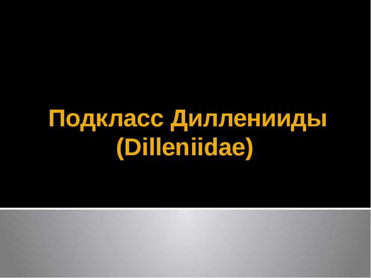 Подкласс Дилленииды (Dilleniidae)