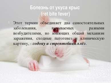 Болезнь от укуса крыс (ret bite fever) Этот термин объединяет два самостоятел...