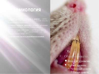 Эпидемиология Основной резервуар инфекции в природе – крысы. Возбудитель у ни...