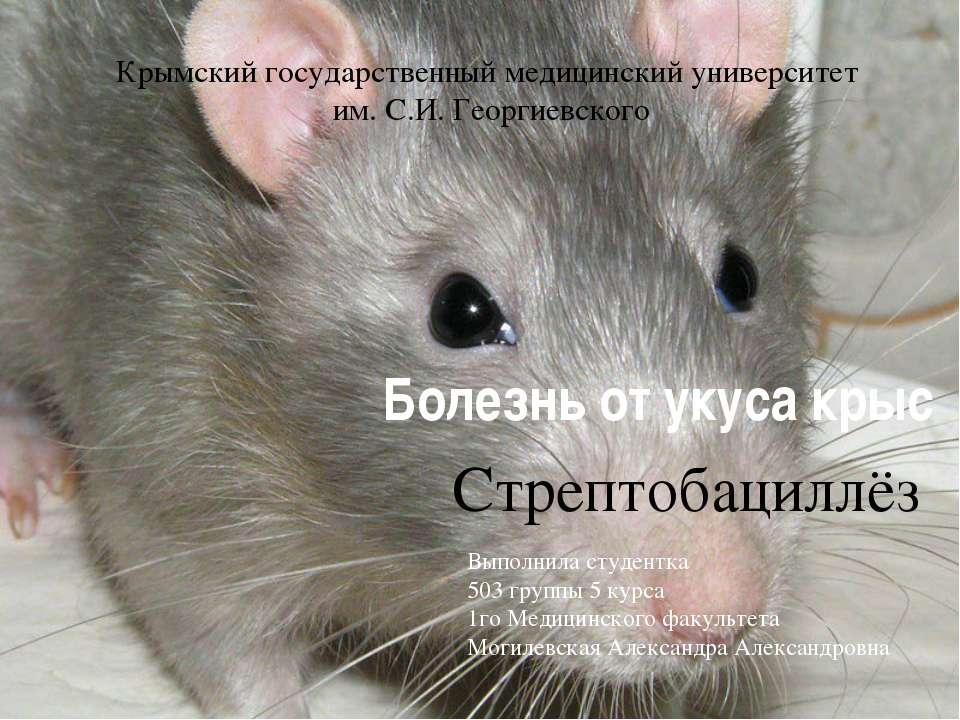 Болезнь от укуса крыс Стрептобациллёз Крымский государственный медицинский ун...