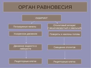 ЛАБИРИНТ Полукружные каналы Ускоренное движение Движение жидкости в лабиринте...