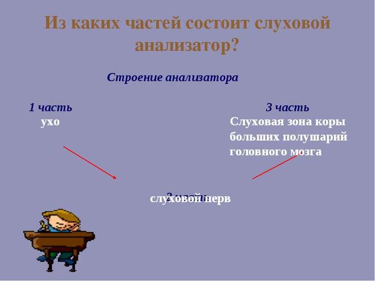 Из каких частей состоит слуховой анализатор? Строение анализатора 1 часть 3 ч...