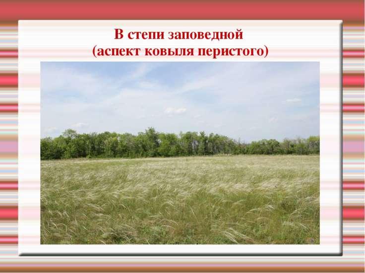В степи заповедной (аспект ковыля перистого)