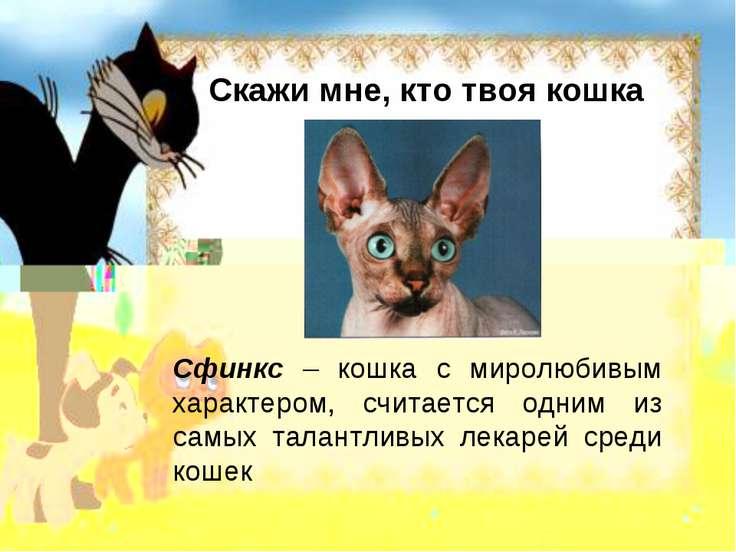 Скажи мне, кто твоя кошка Сфинкс – кошка с миролюбивым характером, считается ...