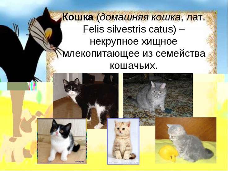 Кошка (домашняя кошка, лат. Felis silvestris catus) – некрупное хищное млекоп...