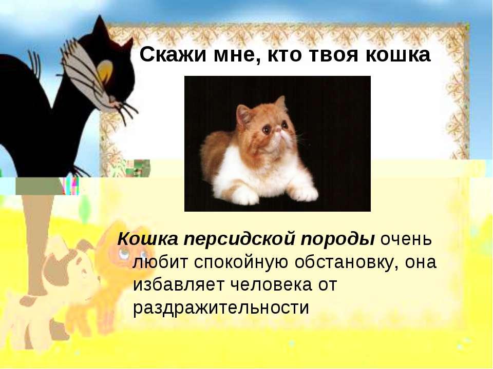 Скажи мне, кто твоя кошка Кошка персидской породы очень любит спокойную обста...