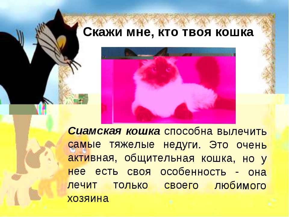 Скажи мне, кто твоя кошка Сиамская кошка способна вылечить самые тяжелые неду...