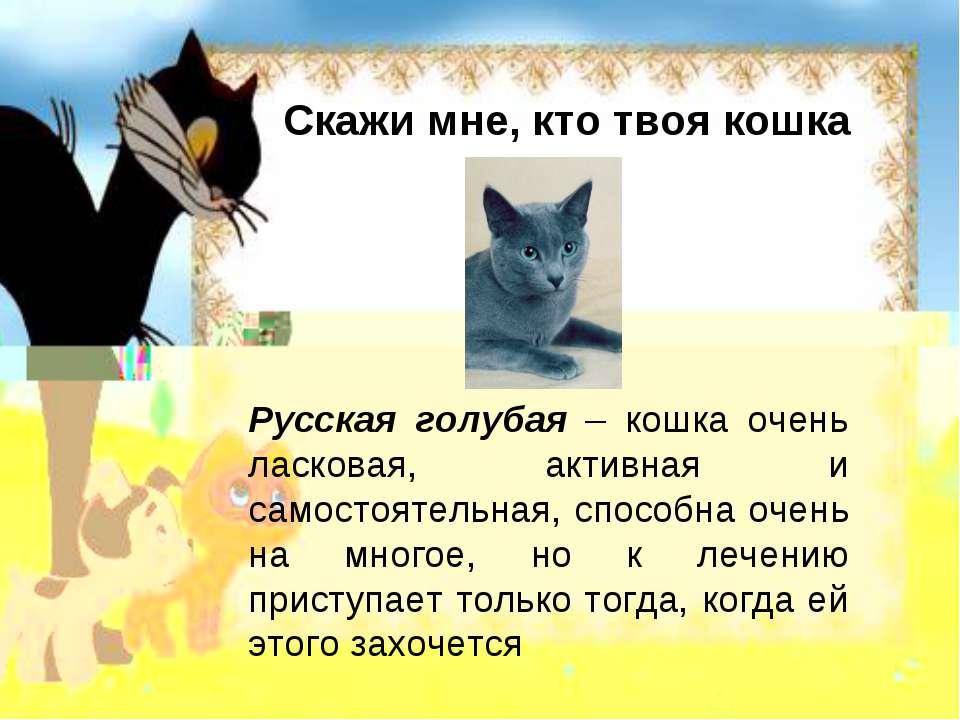 Скажи мне, кто твоя кошка Русская голубая – кошка очень ласковая, активная и ...