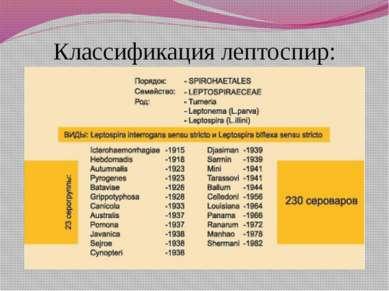 Классификация лептоспир: