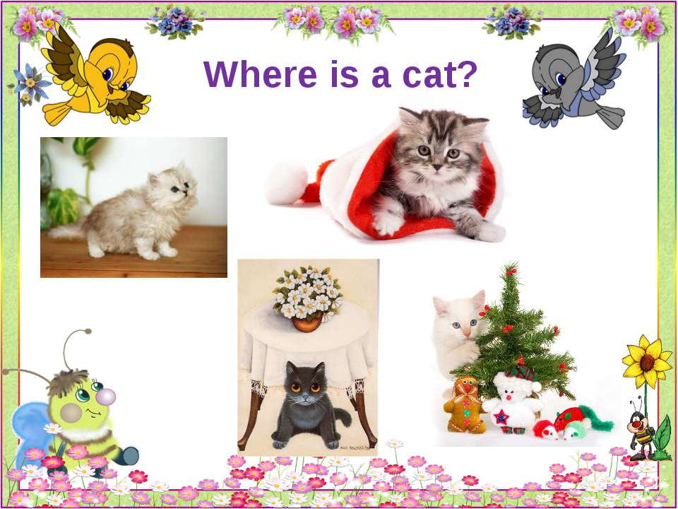 Where is a cat?