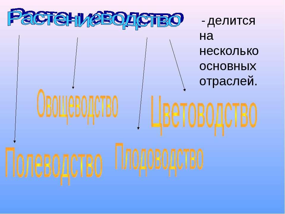 - делится на несколько основных отраслей.