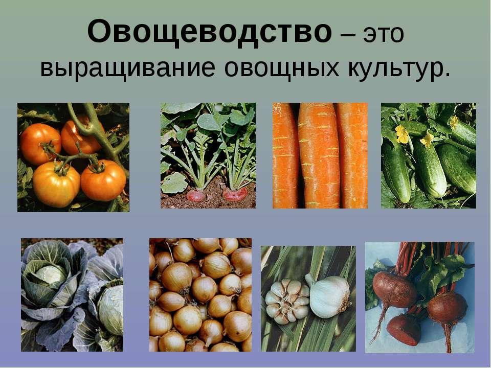 Овощеводство – это выращивание овощных культур.