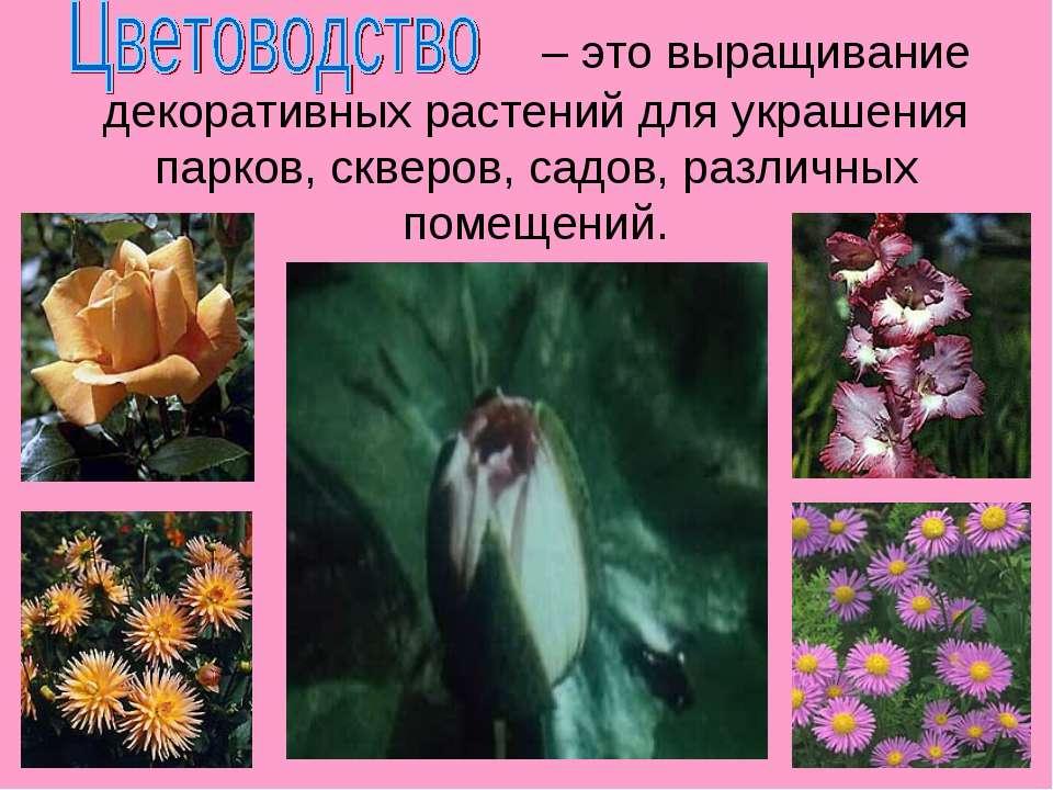 – это выращивание декоративных растений для украшения парков, скверов, садов,...